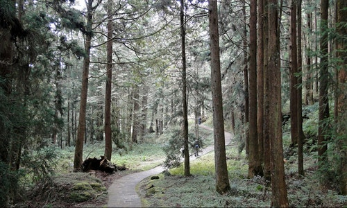 Alishan_Forest_Park_02
