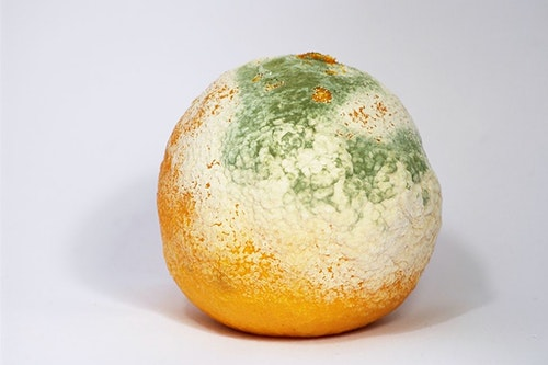 1024px-Mouldy_Clementine